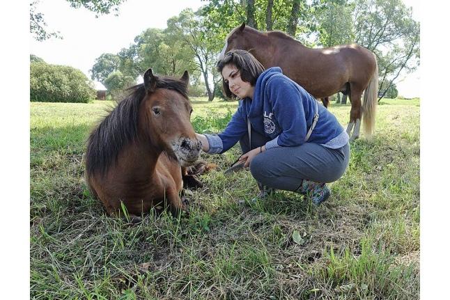 Программа «Человек и лошадь»