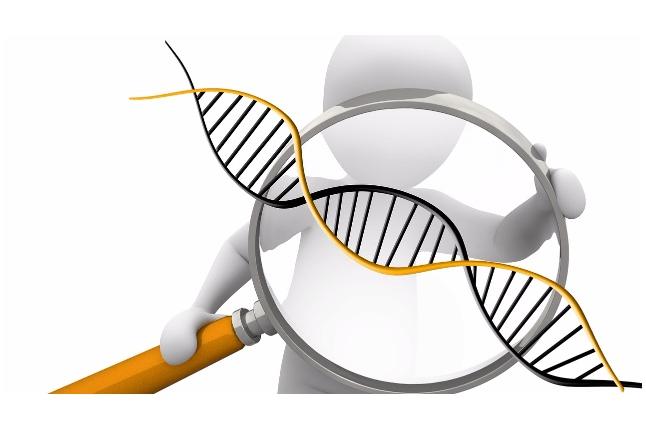 Онкогенетика изучает роль генетических факторов в происхождении и развитии опухолей