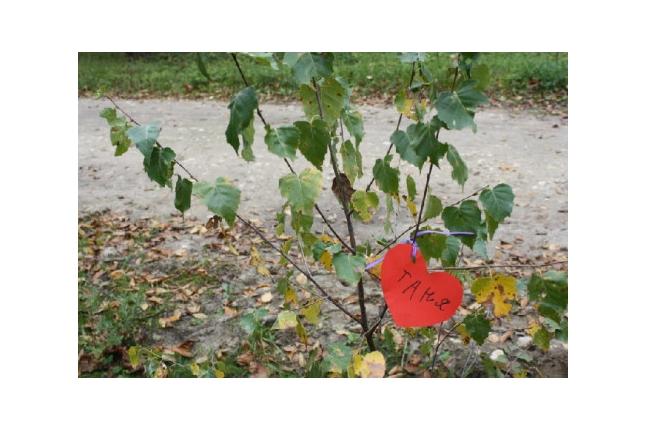 """Каждый посадил свое дерево, 1-ая смена Центра """"ВКС"""", сентябрь 2011 года"""