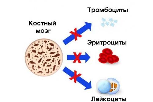 При апластической анемии нарушается выработка всех клеток крови