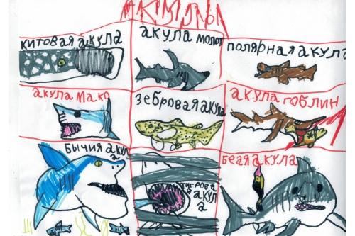 Максим не ограничивает себя динозаврами. Иногда он рисует акул