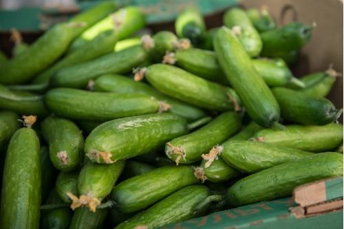 Сегодня свежие овощи уже будут на столах наших подопечных