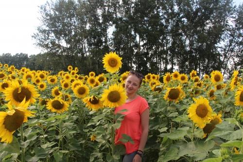 Маша и поле алтайских подсолнухов