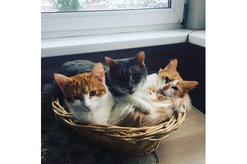 Немного кошек