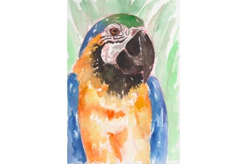 Акварельный попугай