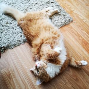 Соучастником кампании Алексея в этом году стал кот Рыжик